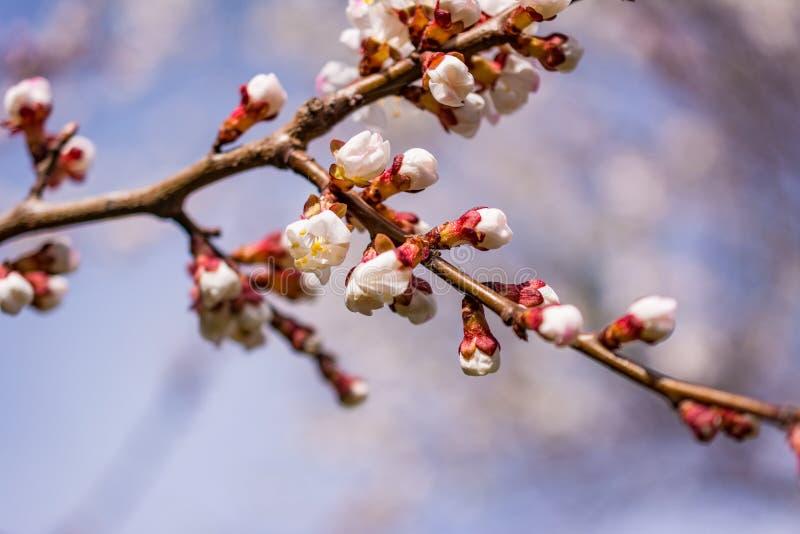 Primera flor imagenes de archivo