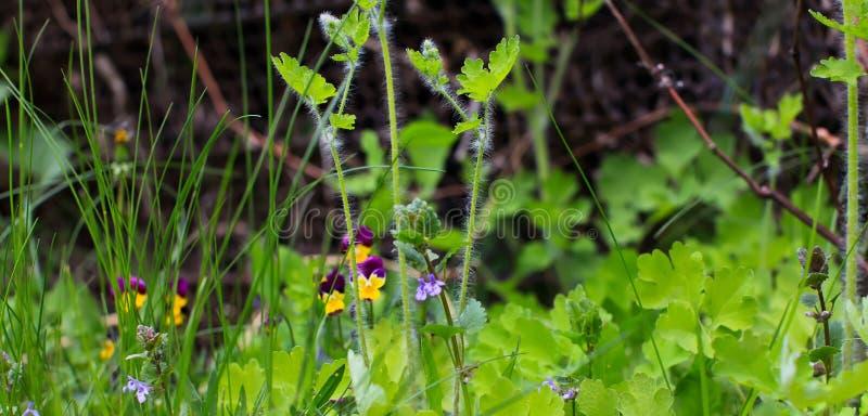 Primera flor silvestre de primavera cerrada Prado de flores silvestres en el apogeo foto de archivo