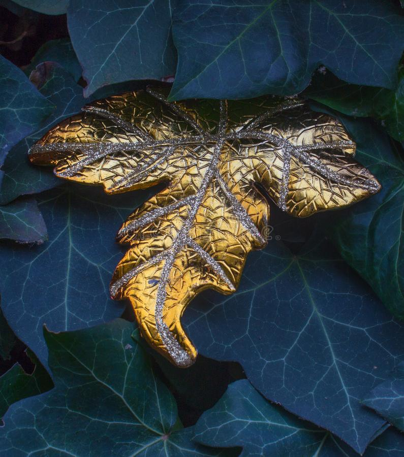 Primera hoja de oro entre las hojas de otoño de una hiedra fotos de archivo