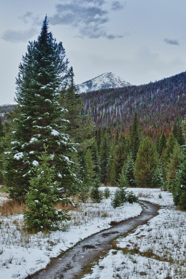 Primera nieve en el bosque de las montañas rocosas. imagenes de archivo