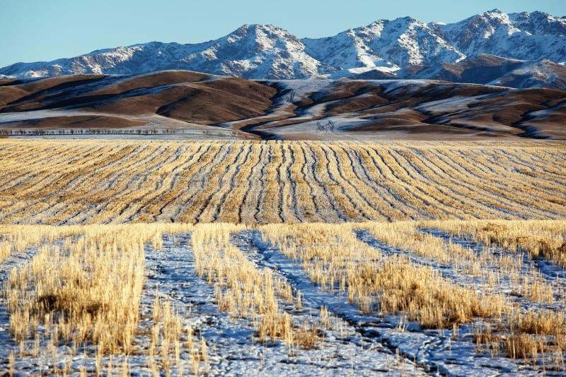 Primera nieve en los campos fotografía de archivo