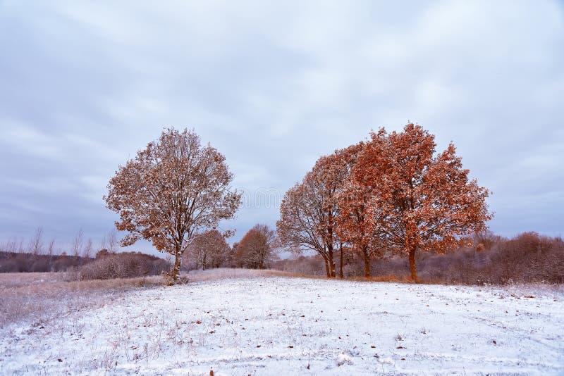 Primera nieve en los colores de la caída del bosque del otoño en los árboles autum foto de archivo libre de regalías