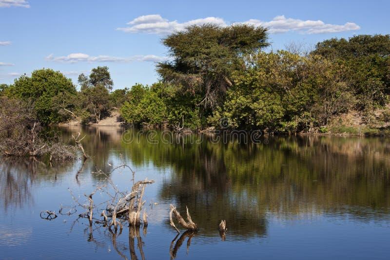 - Primera vez desde 1976 - canal inundado de Savuti imagen de archivo