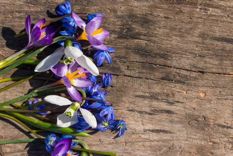 Primeras flores de la primavera en fondo de madera rústico fotos de archivo libres de regalías
