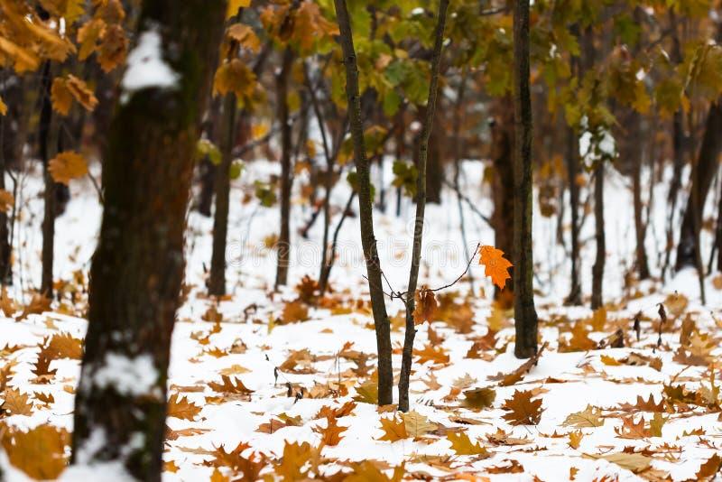 Primeras nevadas en parque urbano en día del otoño fotografía de archivo
