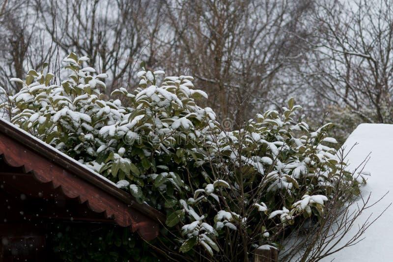 Primeras nieves fotos de archivo libres de regalías