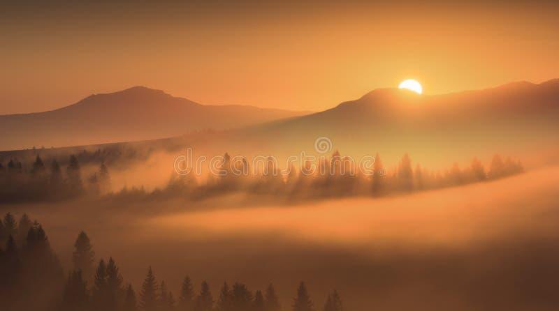 Primeros rayos de oro del sol naciente fotografía de archivo libre de regalías