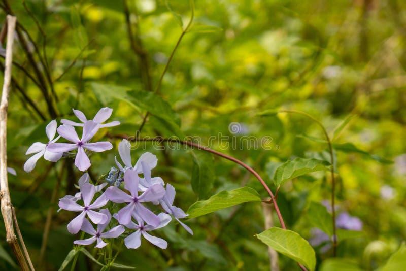 Primeros Wildflowers de la primavera imágenes de archivo libres de regalías
