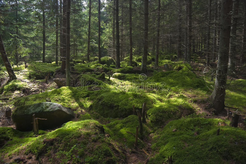 The primeval forest stock photo