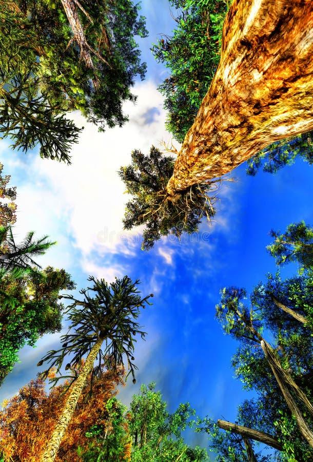 Download Primeval forest stock illustration. Illustration of podlasie - 23700668