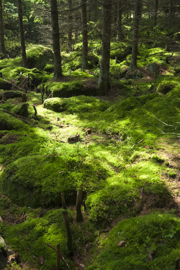 Download The primeval forest stock image. Image of environment - 24194351