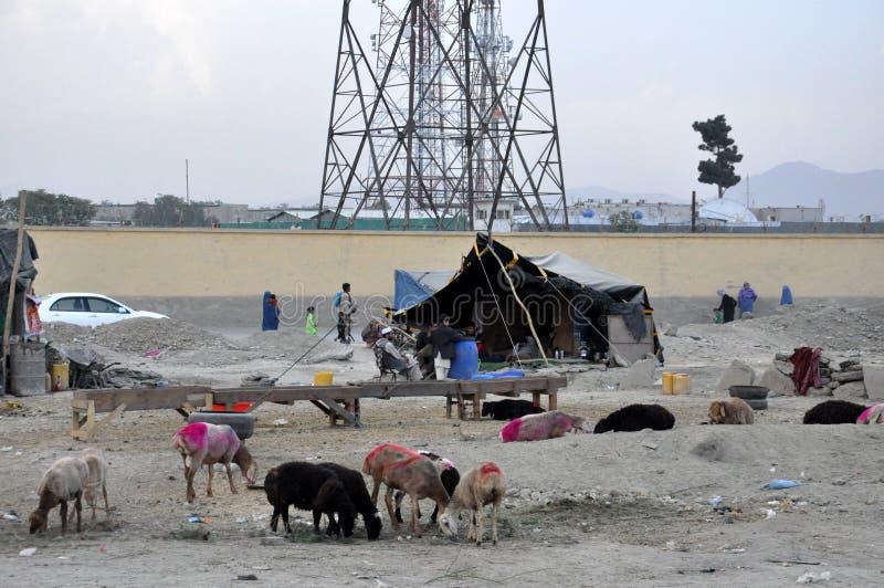 Primitivt nomadläger i Afghanistan royaltyfri foto