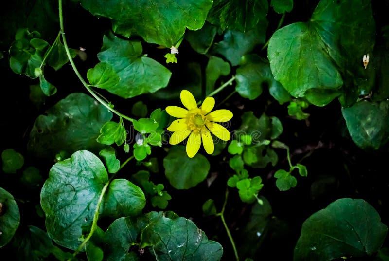 Primo fiore della sorgente colore fotografia stock libera da diritti