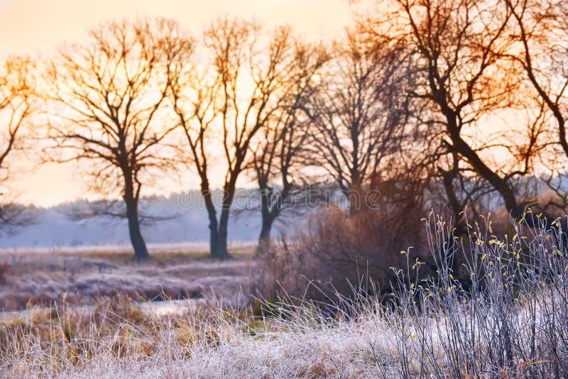 Primo mattino gelido in autunno tardo immagine stock