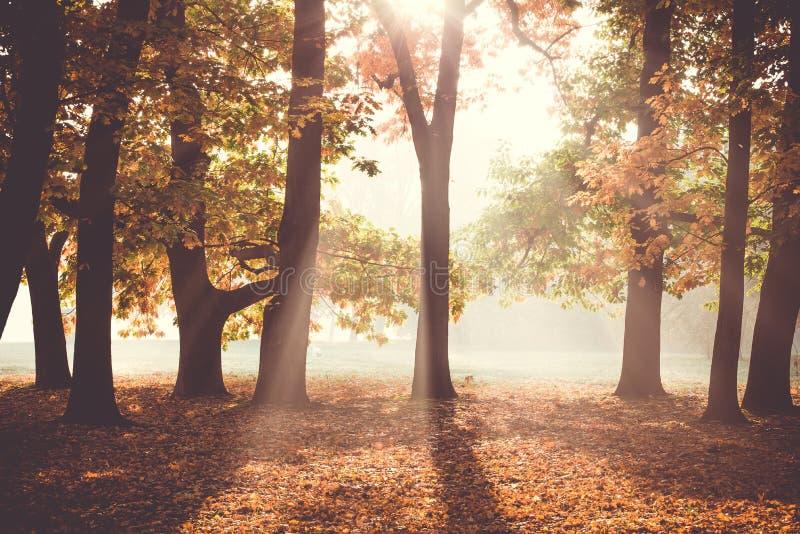 Primo mattino nella foresta di autunno immagine stock