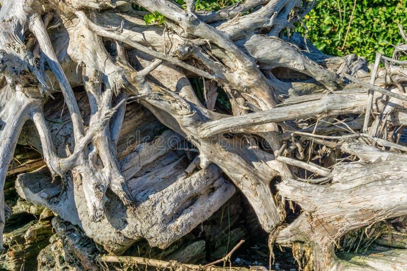 Primo piano aggrovigliato 3 del legname galleggiante fotografia stock