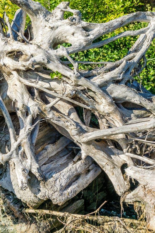 Primo piano aggrovigliato 2 del legname galleggiante fotografia stock libera da diritti