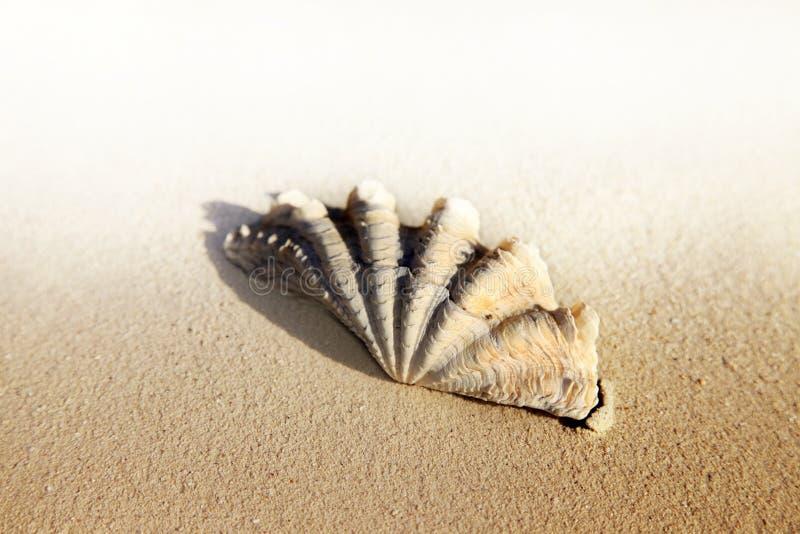 Primo piano bagnato della conchiglia sulla sabbia immagini stock libere da diritti