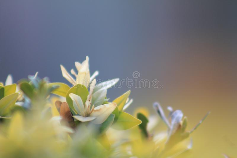 Primo piano Bella vista delle foglie verdi su fondo vago fotografie stock libere da diritti