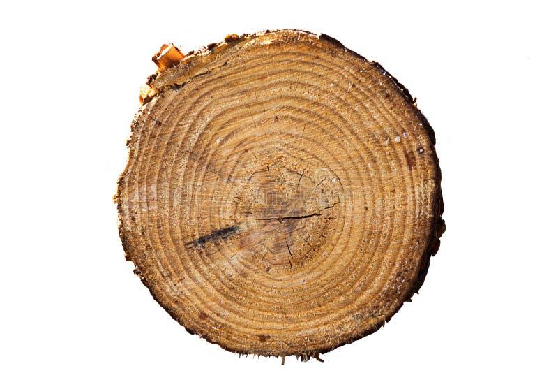 Primo piano degli anelli di albero isolato su fondo bianco fotografia stock