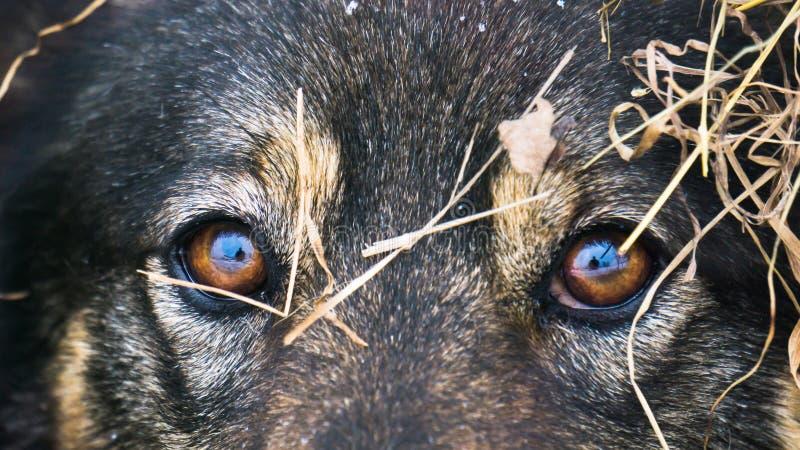 Primo piano degli occhi dei cani immagine stock libera da diritti