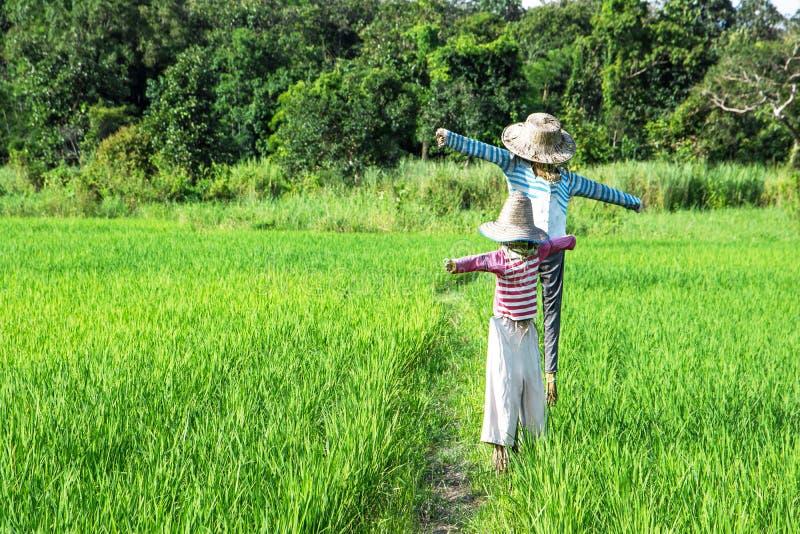 Primo piano degli spaventapasseri che stanno al giacimento verde del riso con il fondo della foresta immagine stock libera da diritti