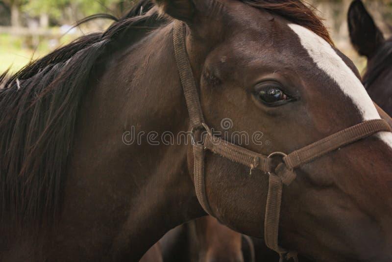 Primo piano dei cavalli in un campo di erba aperto immagini stock libere da diritti