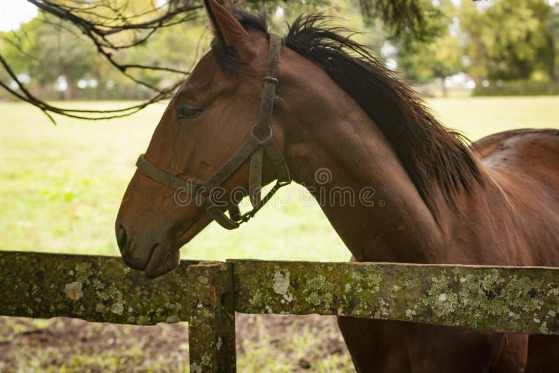 Primo piano dei cavalli in un campo di erba aperto fotografia stock libera da diritti