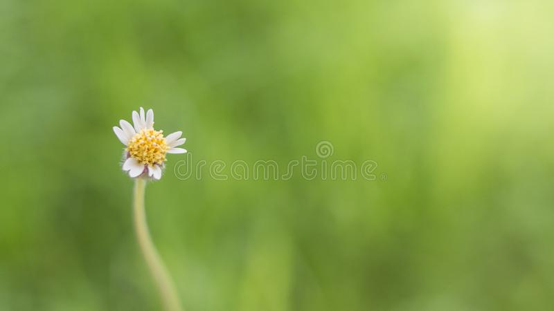 Primo piano dei fiori dell'erba fotografia stock libera da diritti