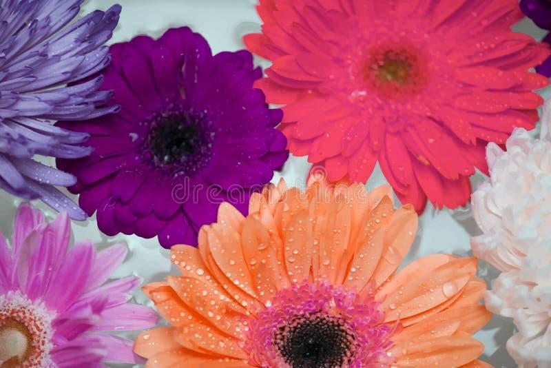 Primo piano dei fiori variopinti che galleggiano sull'acqua illustrazione di stock