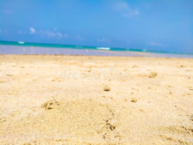 Primo piano dei grani di sabbia sulla spiaggia fotografia stock libera da diritti