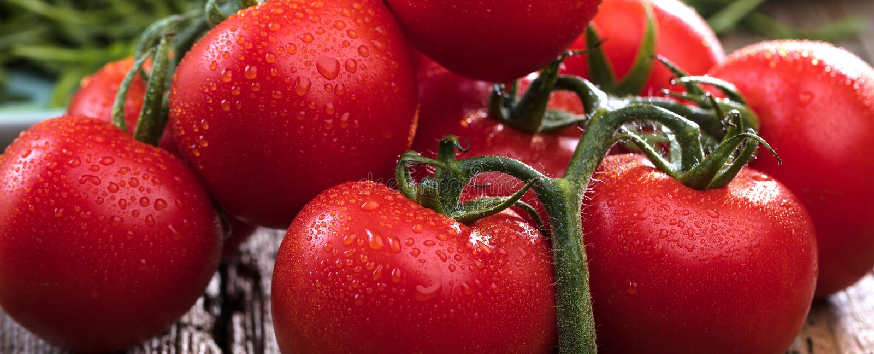Primo piano dei pomodori freschi e maturi su fondo di legno immagine stock libera da diritti
