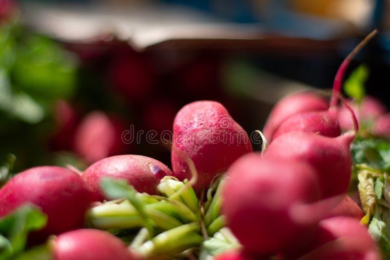 Primo piano dei ravanelli rossi con la scenetta confusa fotografia stock libera da diritti