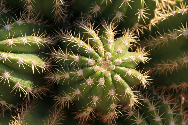 Primo piano del cactus fotografie stock