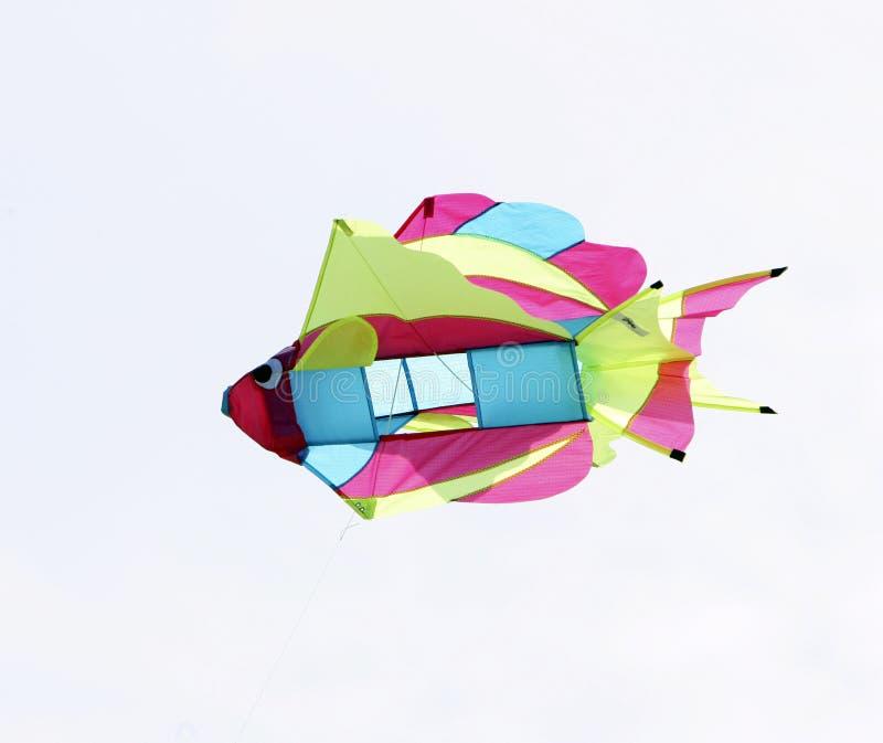 Primo piano del cervo volante dei pesci fotografia stock libera da diritti
