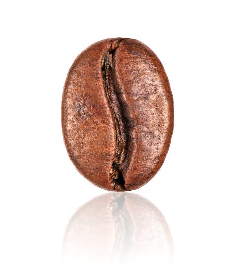 Primo piano del chicco di caffè isolato su fondo bianco immagine stock