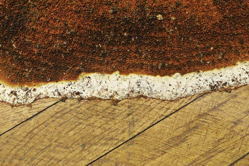 Primo piano del corpo di fruttificazione di serpula lacrymans immagini stock