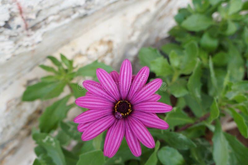 Primo piano del fiore fotografia stock libera da diritti