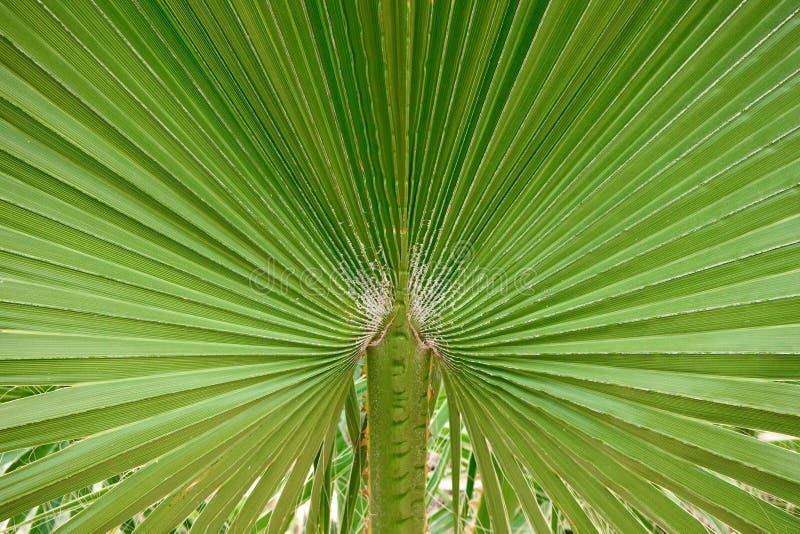 Primo piano del foglio della palma fotografia stock