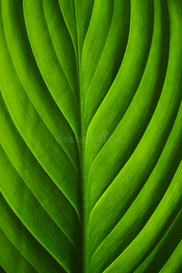 Primo piano del foglio verde fotografie stock