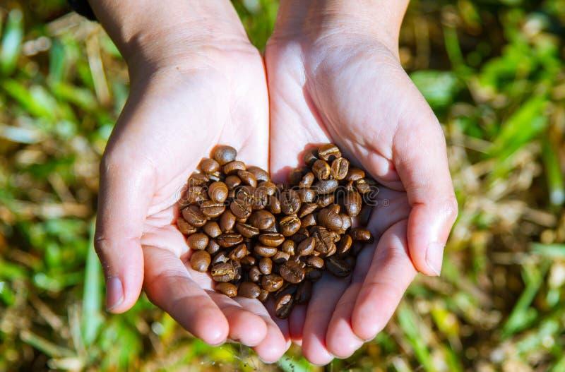 Primo piano del fondo marrone del caffè sulla mano dell'agricoltore immagini stock