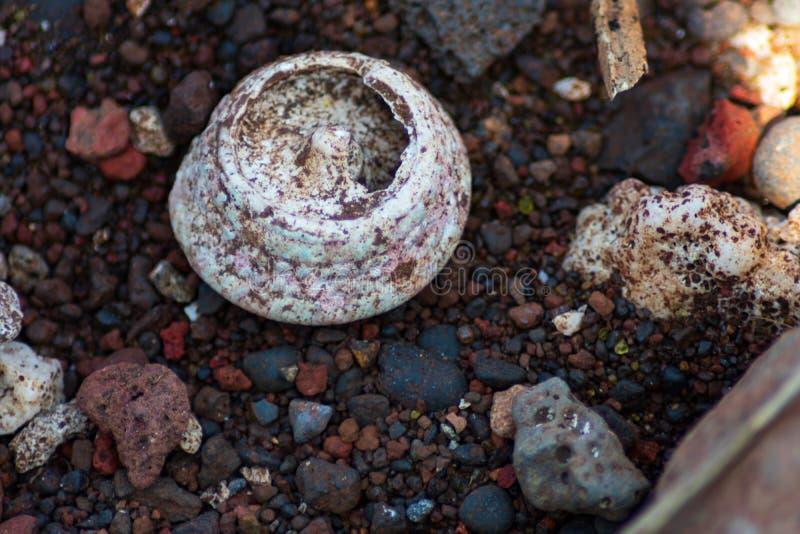 Primo piano del fossile di corallo sulla spiaggia pietrosa fotografia stock libera da diritti
