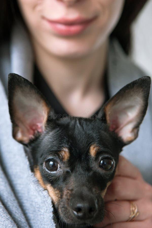 Primo piano del fronte dei cani con il proprietario amoroso sul contesto fotografia stock libera da diritti
