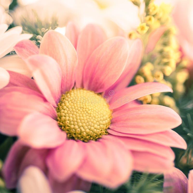 Primo piano del mazzo del crisantemo fotografia stock