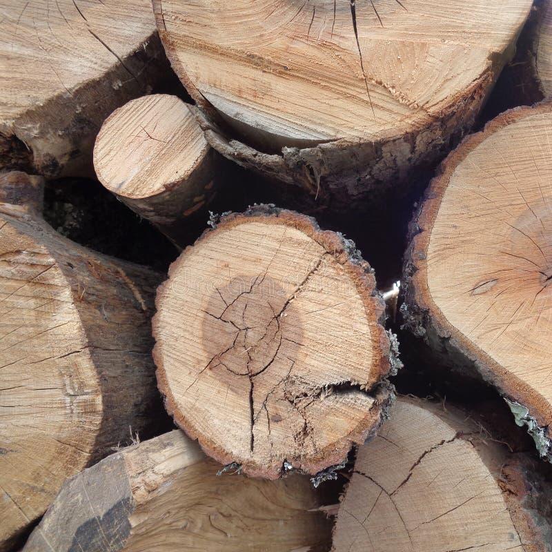 Primo piano del mucchio dei tronchi degli alberi fotografie stock