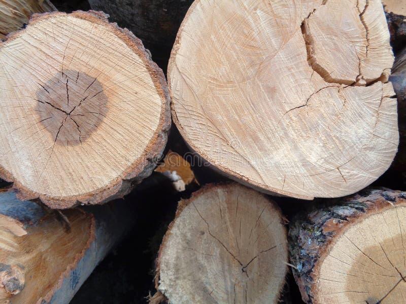 Primo piano del mucchio dei tronchi degli alberi immagine stock libera da diritti