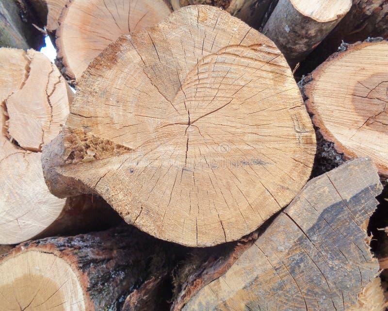 Primo piano del mucchio dei tronchi degli alberi fotografia stock libera da diritti