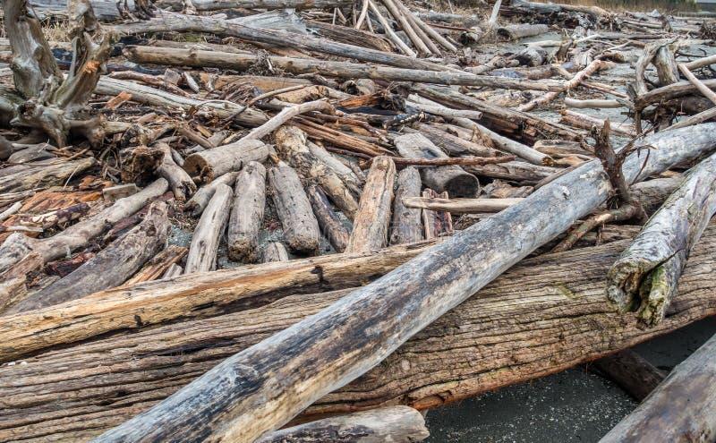 Primo piano del mucchio del legname galleggiante fotografia stock