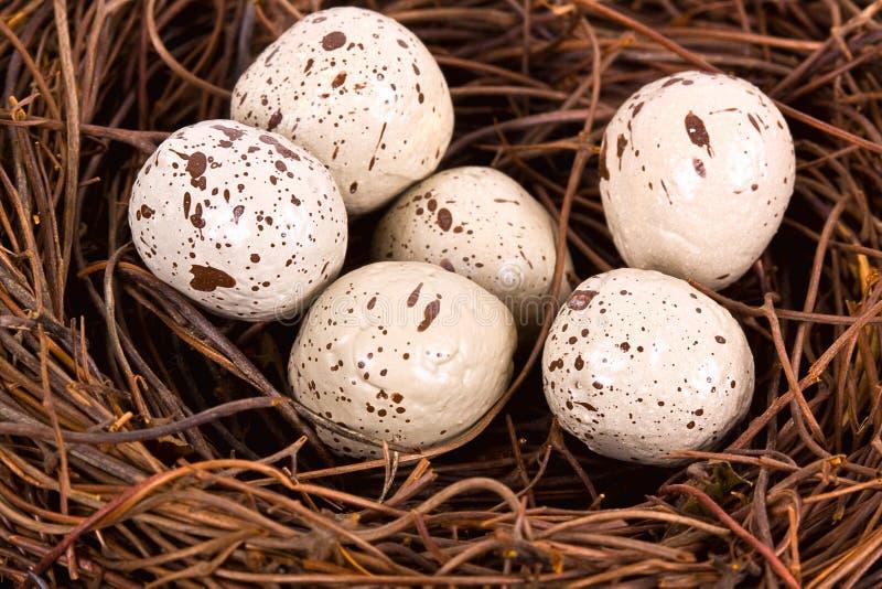 Primo piano del nido. fotografia stock libera da diritti
