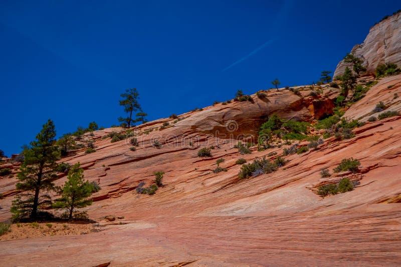 Primo piano del paesaggio della montagna nella valle in Zion National Park, Utah fotografia stock libera da diritti
